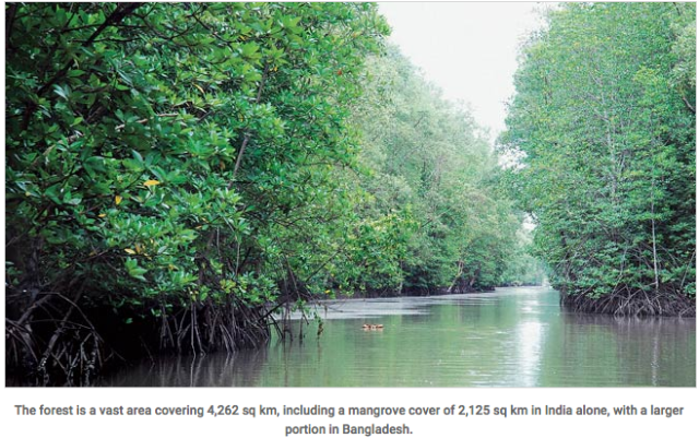 Mamata Banerjee puts Sundarbans on radar for terror threats   Mail Today  News   India Today